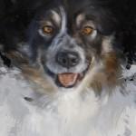schilderij hond hondenportret in olieverf door jennifer koning - border collie ivy