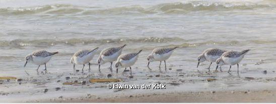 Elwin van der Kolk2
